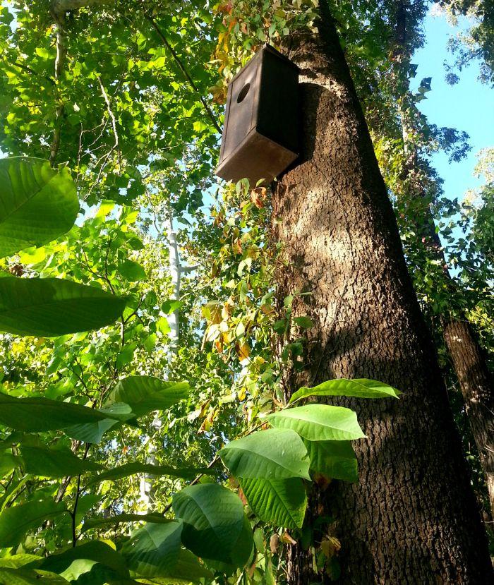 Shenandoah owl box