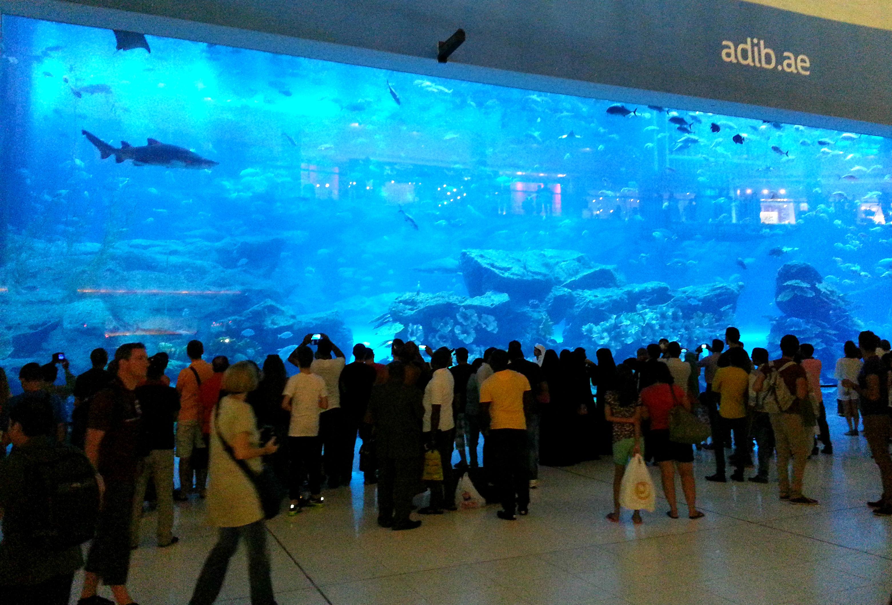 Fish aquarium wiki - Dubai Mall Aquarium
