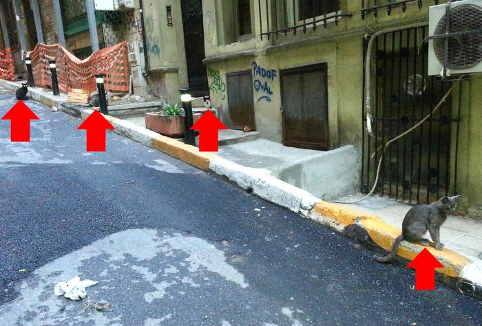 Feral cats in Istanbul