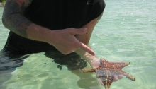 starfish point Grand Cayman island