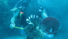 lionfish hunting ocean