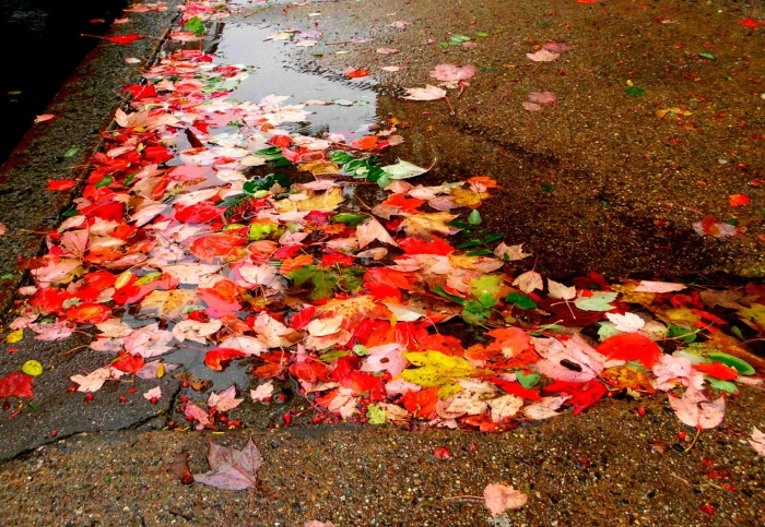 Leaves in a puddle in Portsmouth