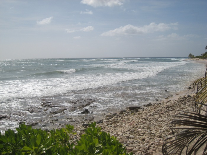 South Sound Beach (photo by P. Andrew Och)