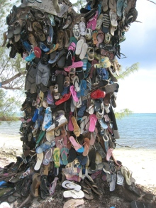 shoe tree grand cayman island