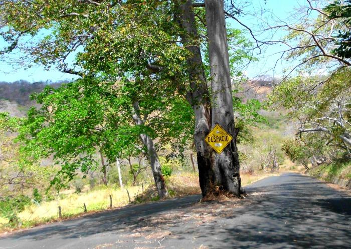Costa Rica slow tree