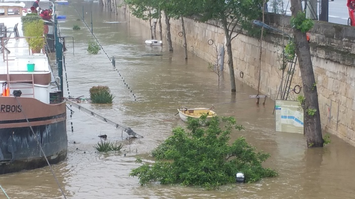 Seine River, Paris, flood, flooding, tree, boat