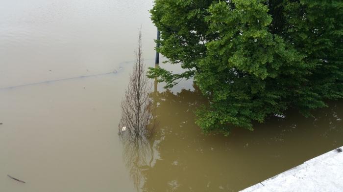 Seine River, Paris, flood, flooding, trees